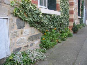 vegetaliser-les-murs-et-trottoirs